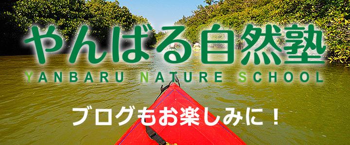 沖縄 体験やんばる自然塾の公式ブログ