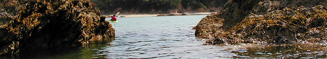 Bコース マングローブ&太平洋(リバー&シーカヤック):5時間